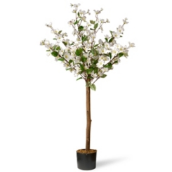 White Dogwood Tree, 4 ft.