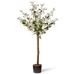 White Dogwood Tree, 4 ft.