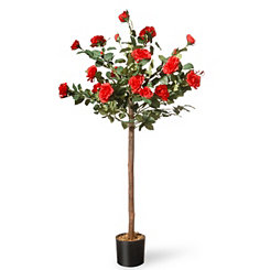 Red Rose Tree, 4 ft.
