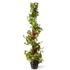 Spiral Ivy Topiary, 4 ft.