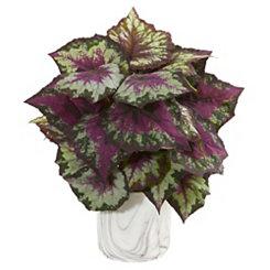 Begonia Arrangement in Marble Vase