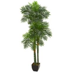 Triple Areca Palm Tree, 5.5 ft.