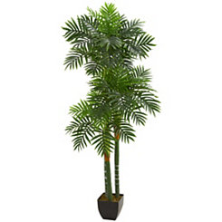 Triple Areca Palm Tree, 5.5 ft.
