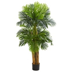Triple Areca Palm Tree, 5 ft.
