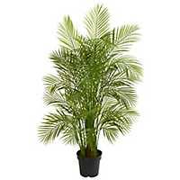 Areca Palm Tree, 5.5 ft.