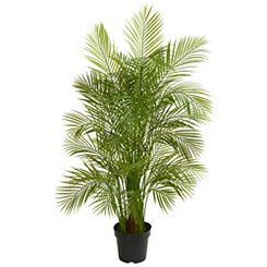 Areca Palm Tree, 5.5 ft.