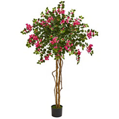 Bougainvillea Tree, 5.5 ft.