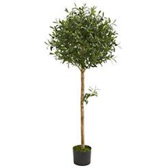 Olive Tree, 5 ft.