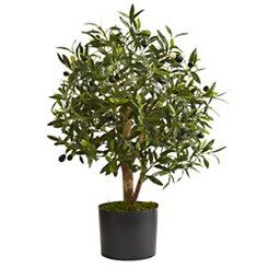 Olive Tree, 29 in.