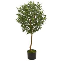 Olive Tree, 3.5 ft.