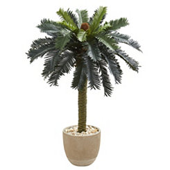 Sago Palm Tree in Sandstone Planter