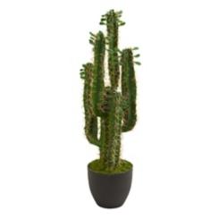 Cactus Plant, 2.5 ft.