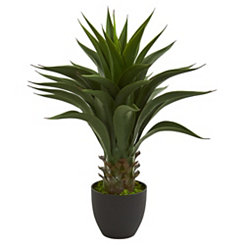 Agave Plant, 28 in.