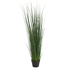 Grass Stalk Plant, 4 ft.