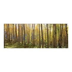Sunlit Colorado Trees Tempered Glass Art Print