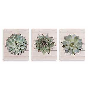 Succulents on Wood Canvas Art Prints, Set of 3