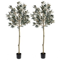 Potted Olive Leaf Topiary, Set of 2