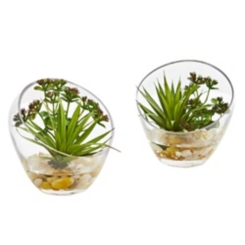 Spiky Succulents in Glass Planters, Set of 2