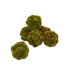 Sedum Succulent Greenery Spheres, Set of 6