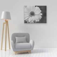 Shuttertree Daisy Canvas Art Print