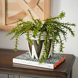 Flower Arrangements Centerpieces Kirklands