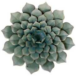 Bungalow Dahlia Flower Wall Sculpture