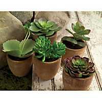 Succulents in Natural Tan Pots, Set of 5