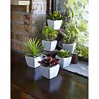 Succulents in White Square Pots, Set of 6