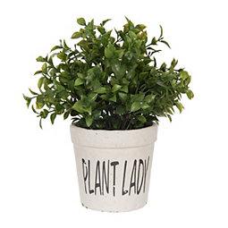 Plant Lady Tea Olive Tree Arrangement