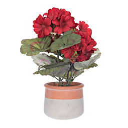 Red Geranium Arrangement