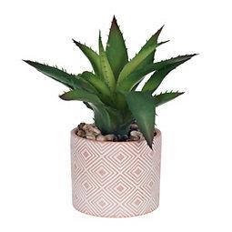 Succulent in Diamond Terra Cotta Planter