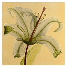 See Through Lily Canvas Art Print at Kirkland's