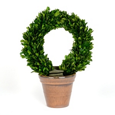 Boxwood Wreath Preserved Topiary, 13 in. at Kirkland's