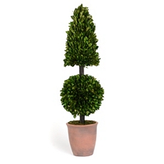 Boxwood Pyramid Ball Preserved Topiary, 28 in. at Kirkland's