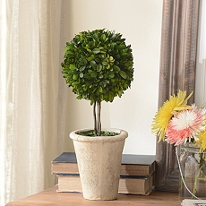 Boxwood Single Ball Preserved Topiary, 16 in. at Kirkland's