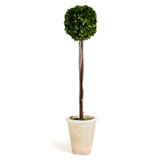 Boxwood Single Ball Preserved Topiary, 29 in. at Kirkland's