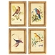 Birds Framed Art Print, Set of 4 at Kirkland's
