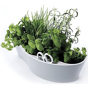 Herb Garden by Royal VKB