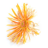 Fringe Daisy Napkin Ring - Orange