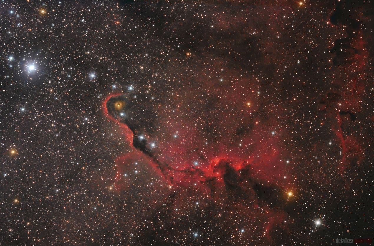 The Elephant's Trunk Nebula