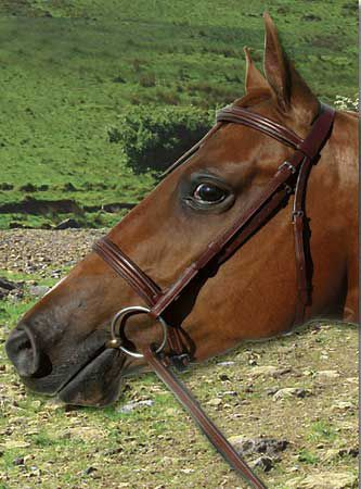 Paris Tack Fancy Stitch Bridle Chestnut Cob Best Price