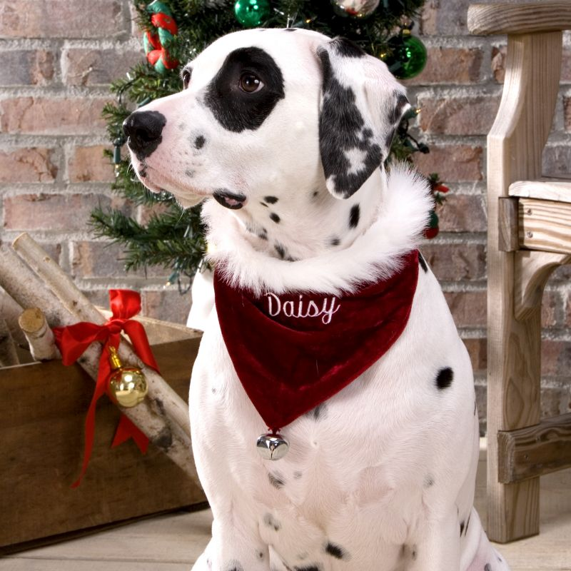 Santa Dog Bandana Personalized Medium