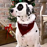Santa Dog Bandana Personalized