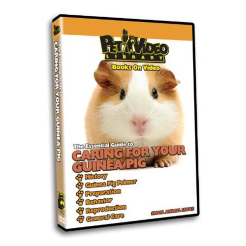 Caring For Yor Small Pet DVD Guinea Pig