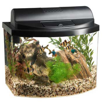 Aqueon Mini Bow Aquarium Kit 5 Gallon Black Best Price