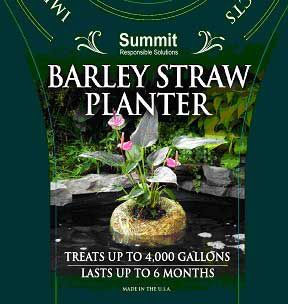 Summit Barley Straw Planter Large-14 Oz
