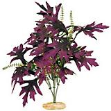 ColorBurst Florals Amazon Plant