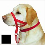 Holt Training Head Collar