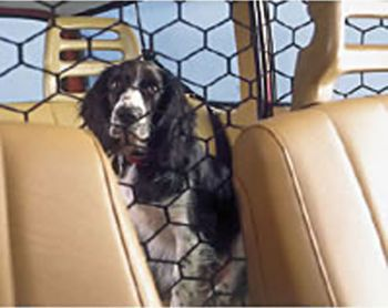Back Seat Rider Net Best Price