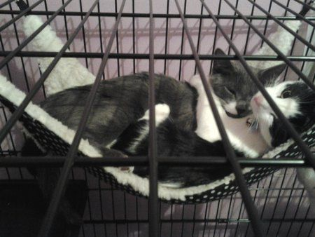 ProSelect Polka Dot Cat Cage Hammock